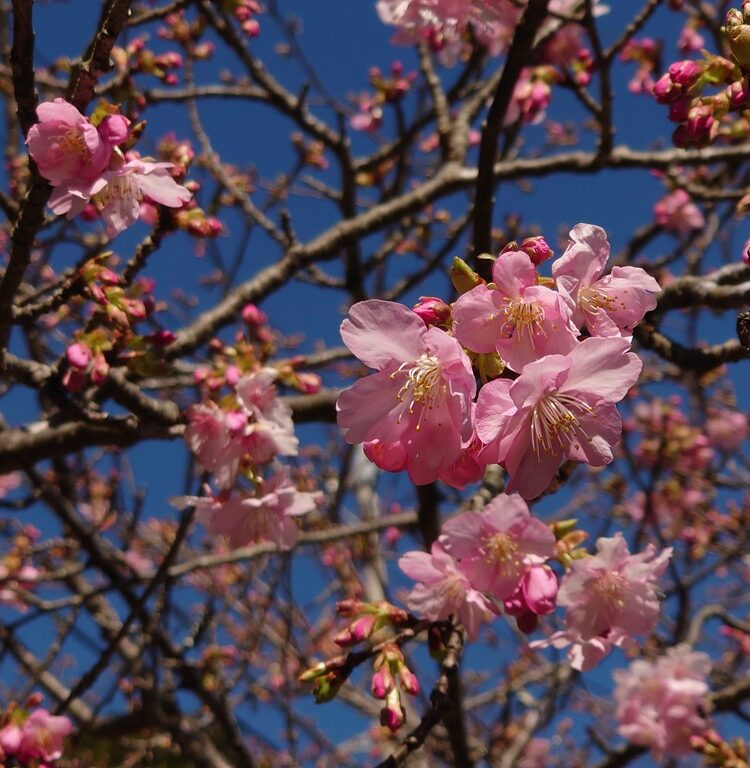 春の鋸南町佐久間ダムの様子をyoutubeに投稿しました!